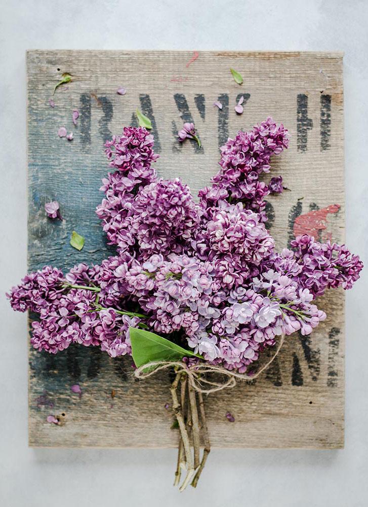 Lila violet