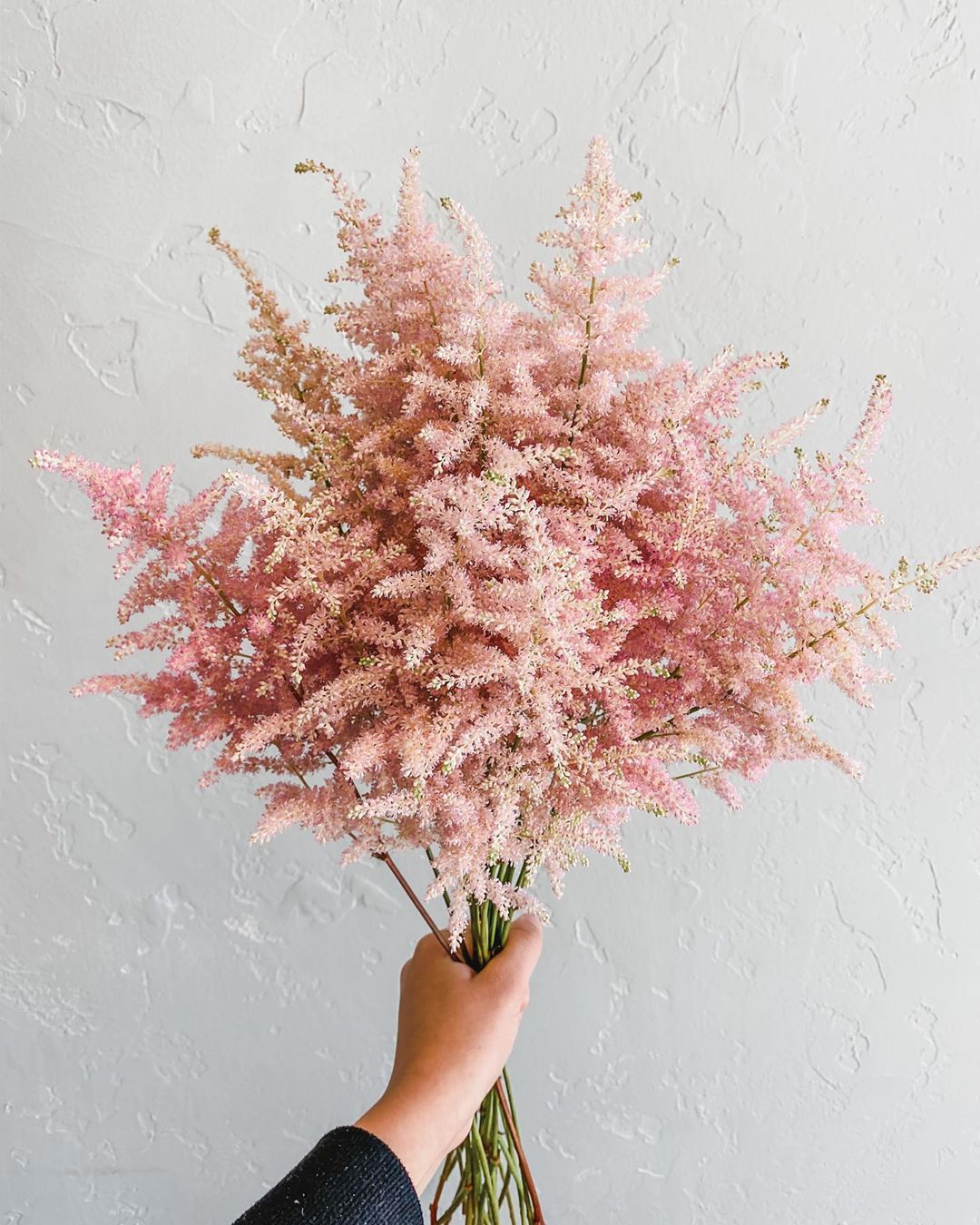 Bouquet cocooning d'astilbes