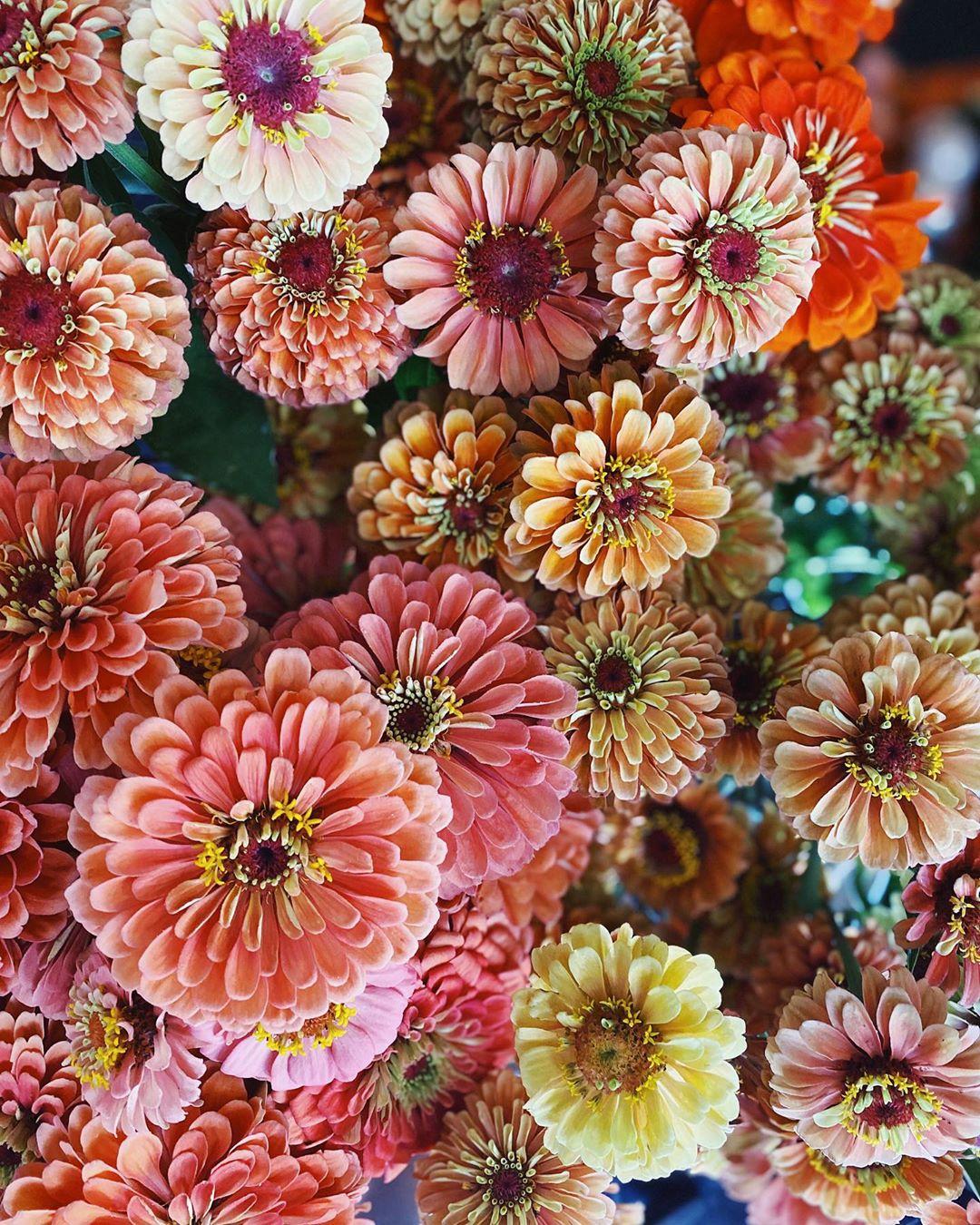 Fleurs de saison pour un mariage d'été